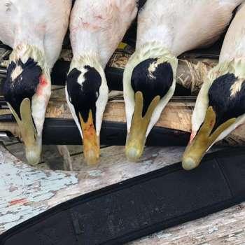 duck07