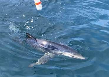 mo_sharkfishing