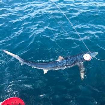 shark02
